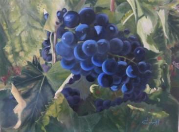 Raisins du Luberon